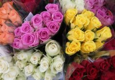 The Significance And Meaning Of Rose Flowers Based On The Colors